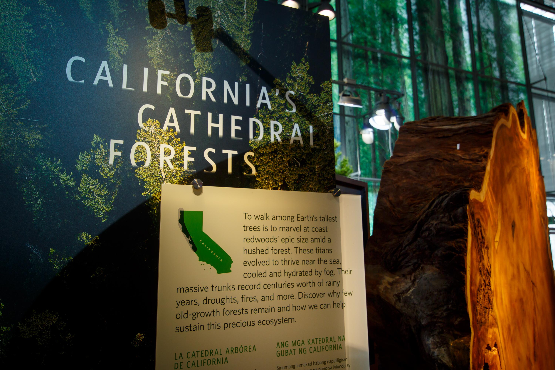California Academy of Sciences celebrates new exhibit –