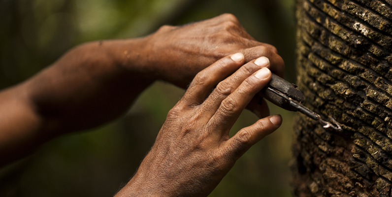 Courtesy of WWF and Rubens Matsushita/ICMBio - Man rubber tapping a tree in Cazumbá, an ARPA region. Rubber tapping provides a sustainable source of income for many in the Amazon.