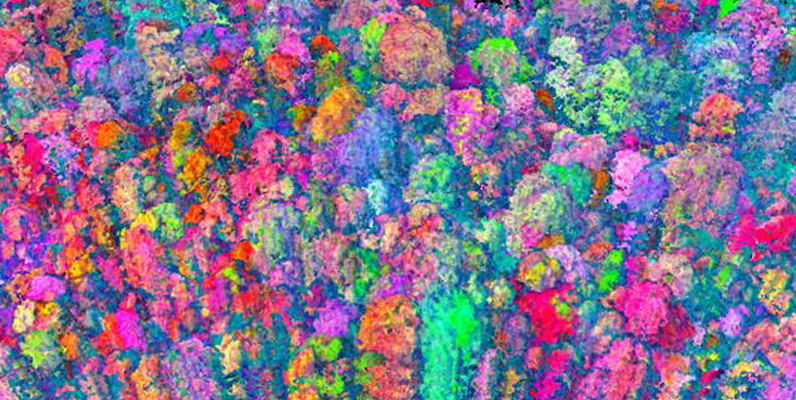 Courtesy of Greg Asner, Carnegie Airborne Observatory- AToMS 3D chemical composition of Amazon tree forest