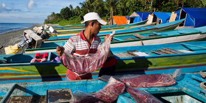 Courtesy of Paul Hilton for Fair Trade USA - Tuna loins are offloaded, Waepure village, Buru Island, Indonesia