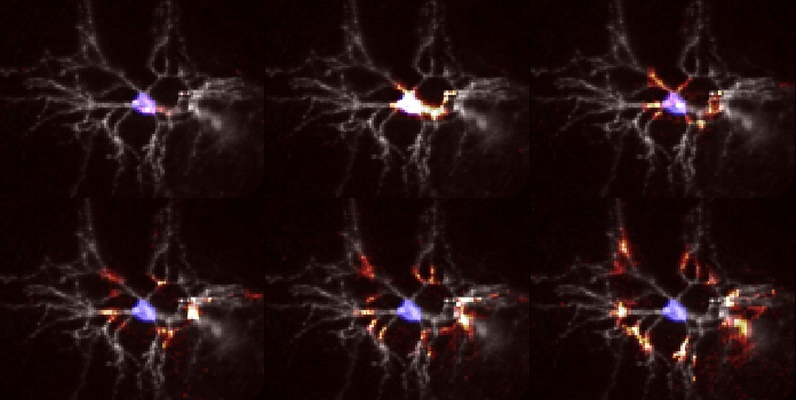 Courtesy of Adam Cohen, Harvard- Uron firing montage