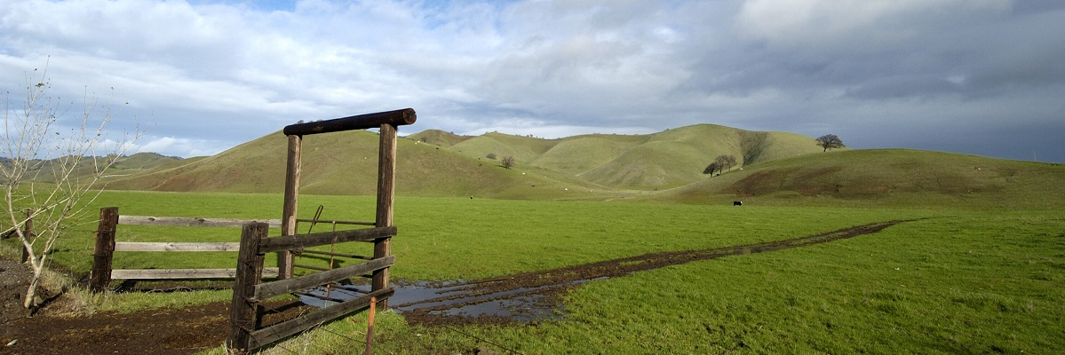 Courtesy of Scott Hein, East Contra Costa County Habitat Conservancy- Fox Ridge Manor