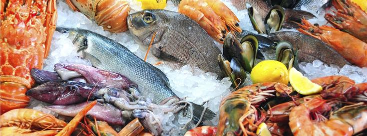 37 innovative seafood companies to pitch at Fish 2 0 finals
